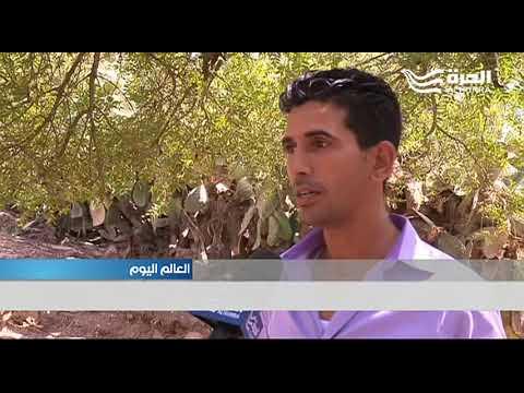 المرأة القروية المغربية ما زالت تعاني من الفقر والأمية  - 19:21-2017 / 10 / 15