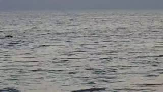 Sharks Black Sea Ukraine Акулы Черного моря!(На самом деле конечно дельфины. Кинбурнская коса. Dolphins at the Black Sea, Kinburn sand bar, Ukraine., 2016-07-04T15:59:00.000Z)