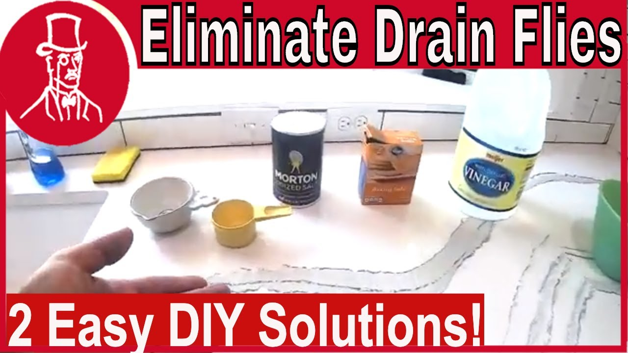 How To Get Rid Of Drain Flies Youtube