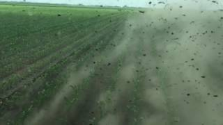 JohnDeere 6125r row cultivation corn in Serbia