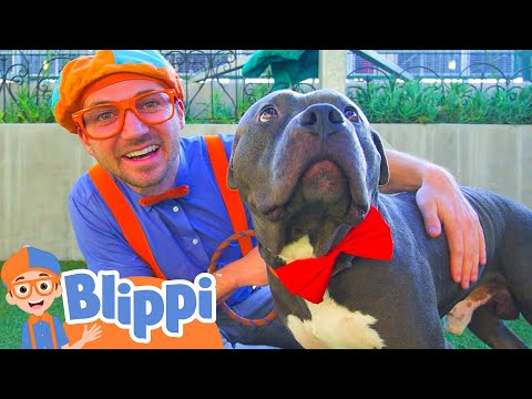 Blippi Visits an Animal Shelter | Learn Animals for Children and The Pet Song