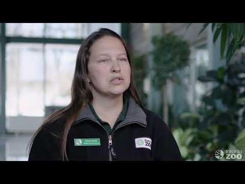 Toronto Zoo- Helping Conserve Arctic Polar Bears