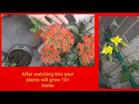 Grow money plant from cutting || how to grow money plant from cutting || plant grown from its stem |