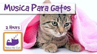Música para ajudar a relaxar o seu gato, relaxante canções do gato para gatos sublinhou thumbnail