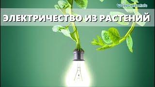 Электричество из комнатных растений -миф или реальность? Дыхание жизни