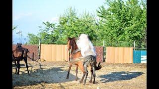 Ферма. Лошади. Красивые Фотографии.