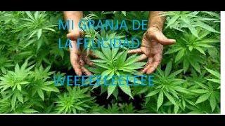 MI GRANJA DE LA FELICIDAD GARDEN OF WEED