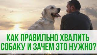 Как правильно хвалить собаку и зачем это нужно? Правильная дрессировка собак