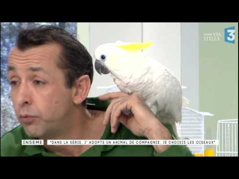 Inseme 2 Du 07/03/2017 : J'adopte Un Perroquet