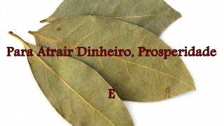 2 Simpatias Com Folhas de Louro Para Atrair Dinheiro, prosperidade e Realização Pessoal thumbnail