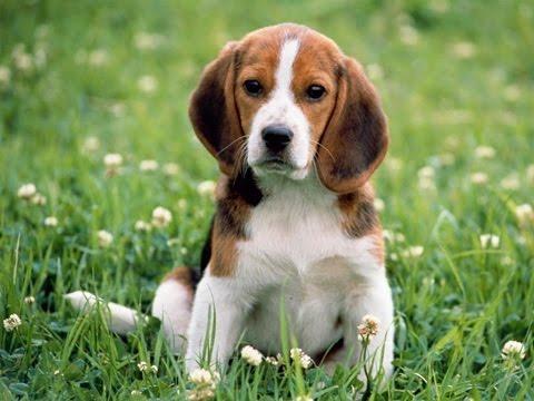 Comment être un bon maître pour son chien : Education du chiot au chien adulte