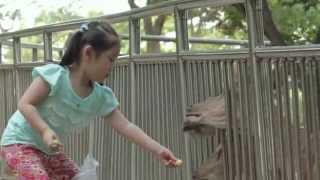 Be Kind to Animals - با حیوانات مهربان باشیم