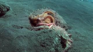 Вулкан осьминогов.(Документальный фильм National Geographic в HD качестве)