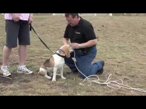 Dog training using remote training collar by BigLeash
