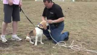 Dog Training Using Remote Training Collar By Bigleash
