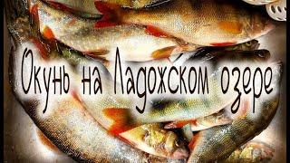 ОКУНЬ на Ладожском озере удачная Рыбалка на Ладоге Perch on Lake Ladoga Successful Fishing on Ladoga