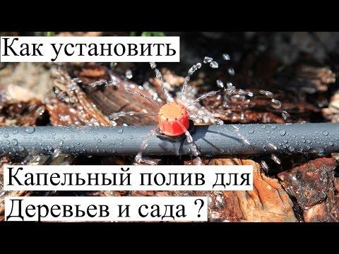 видео: Как сделать Капельный полив для Деревьев и сада ? Монтаж капельниц для полива.