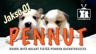 Koirat: Pennut - Kasvattajan luona - jakso 01