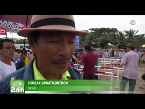 VTC14_Lễ hội đua trâu nước ở Thái Lan