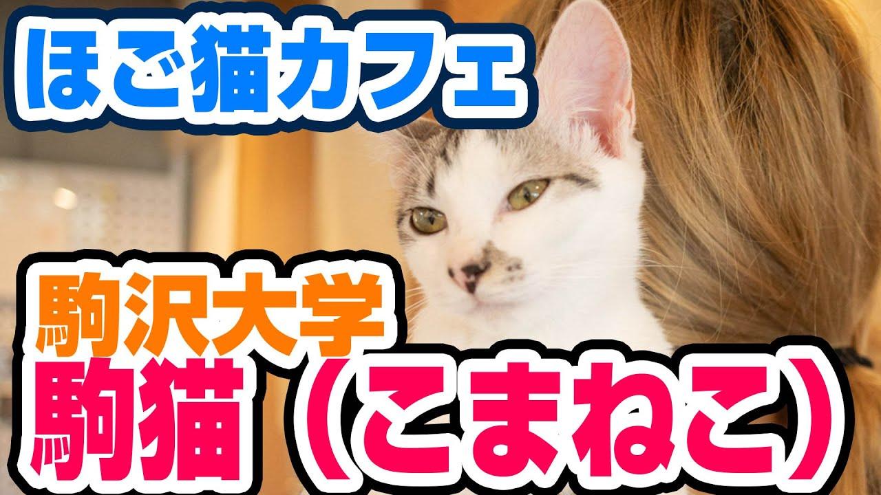 大学 koneko 駒澤
