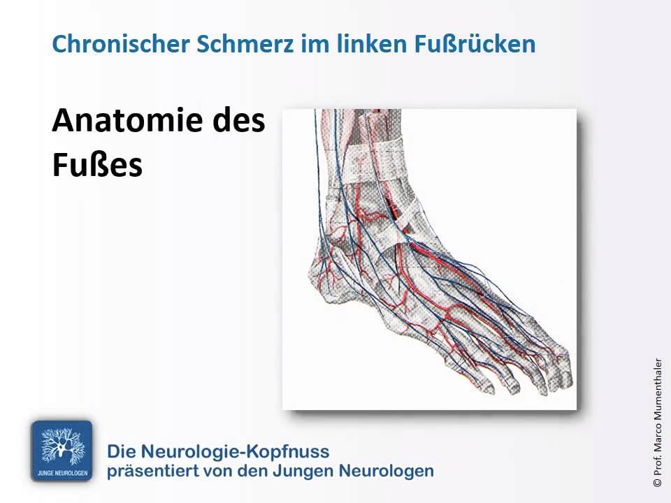 Wunderbar Anatomie Der Fußrücken Bilder - Menschliche Anatomie ...