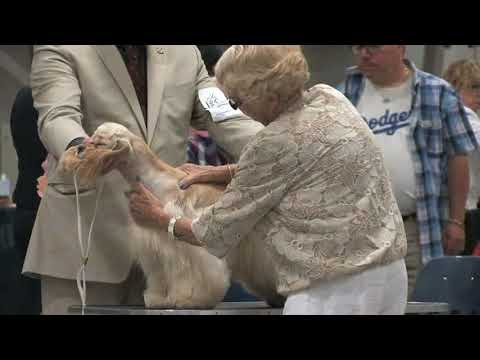 Best of Breed - 2018 ASC Cocker Spaniel National Specialty