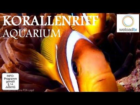 Aquarium in HD