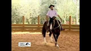 Meu cavalo não obedece ao comando, não sei o que fazer...