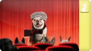 Hipster Pets Episode 4 - Film Screening