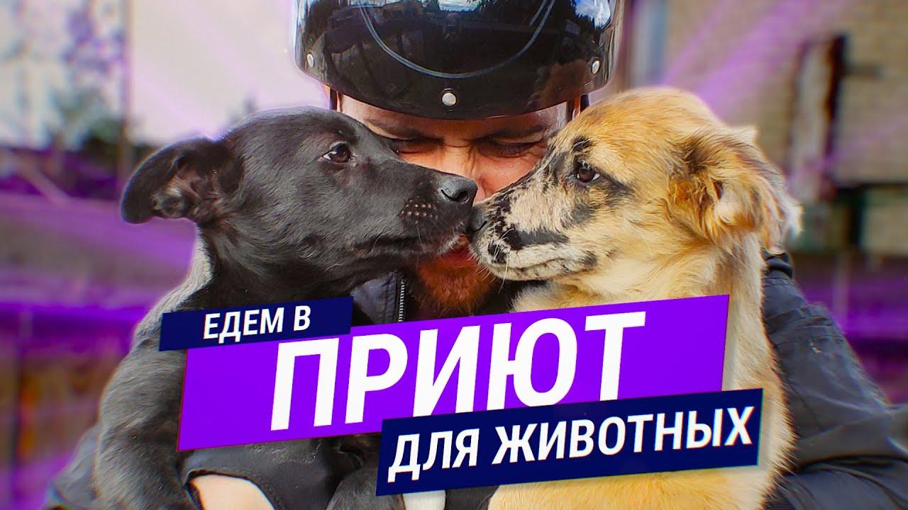 Едем в Приют Для Животных // Играем С Собаками // ЗООЗАЩИТА Псков
