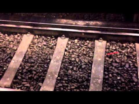 metro atropella a plaga de ratas. muy cruel...