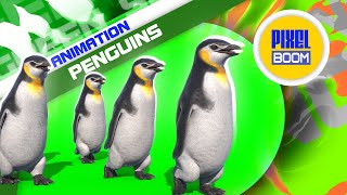 Green Screen Group of Penguins 3D Animation PixelBoom