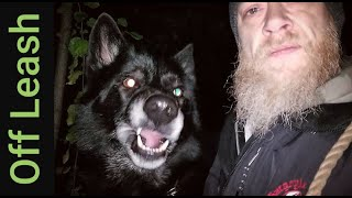 My Guide to Off Leash Hiking at Night with Dogs