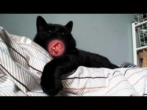 Kamehameha Cat
