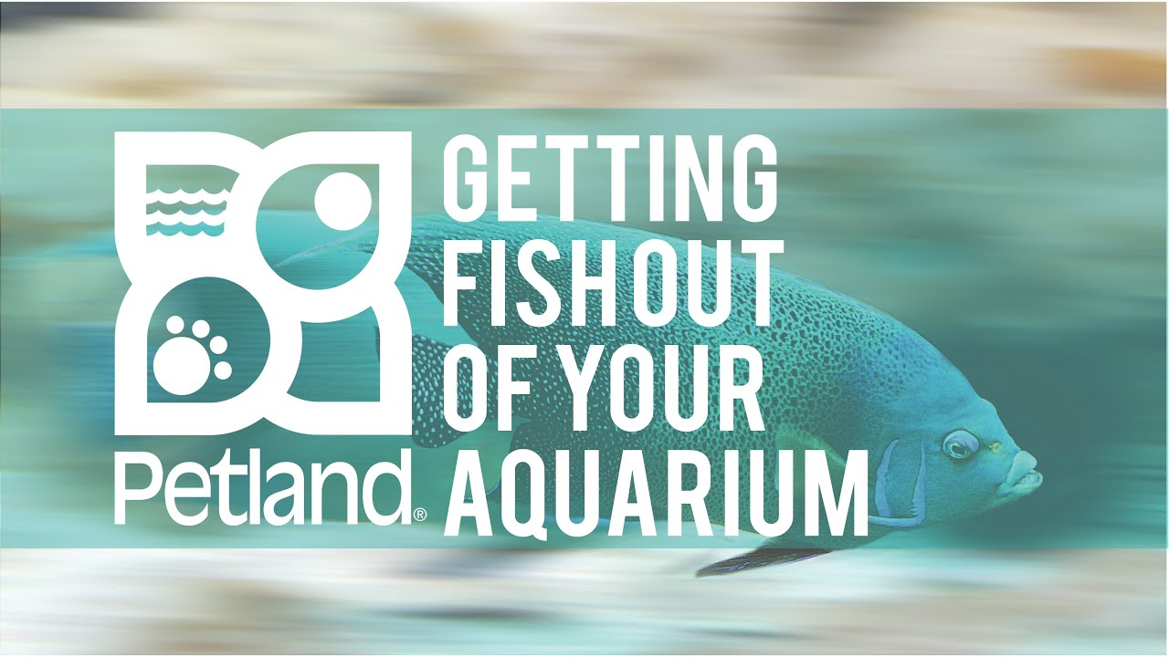 Petland Pet Tip on Getting Fish Out of your Aquarium with Phil