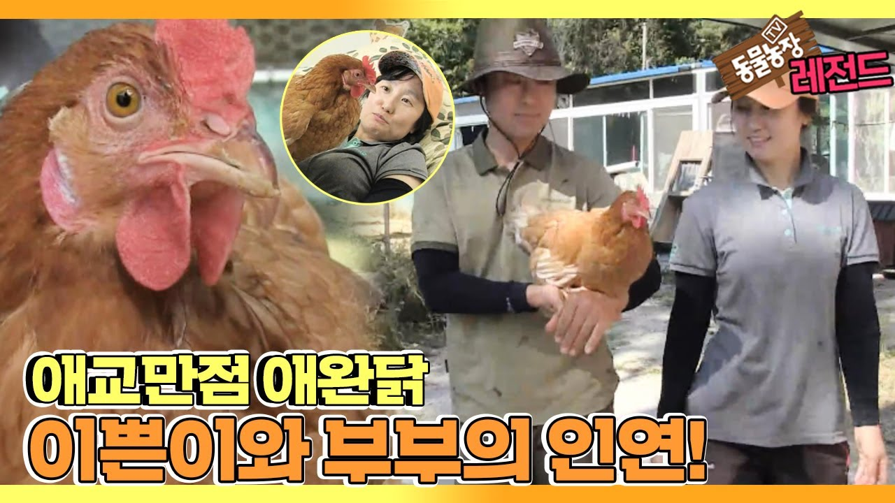 [TV 동물농장 레전드] '내겐 너무 예쁜 애완닭 이쁜이' 풀버전 다시보기 I TV동물농장 (Animal Farm)   SBS Story