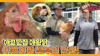 [TV 동물농장 레전드] '내겐 너무 예쁜 애완닭 이쁜이' 풀버전 다시보기 I TV동물농장 (Animal F…