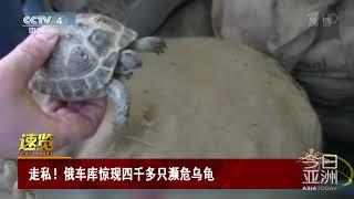 [今日亚洲]速览 走私!俄车库惊现四千多只濒危乌龟  CCTV中文国际
