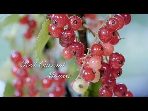 レッドカラント ヨーグルトムース Red Currant Yoghurt Mousse