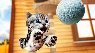 Мультик про котят Приют для кошек Игра как мультфильм КОТЯТА Видео для детей CatHotel #МАЛЫШЕРИН