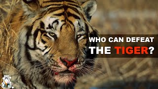 6 Animals That Could Defeat A Tiger