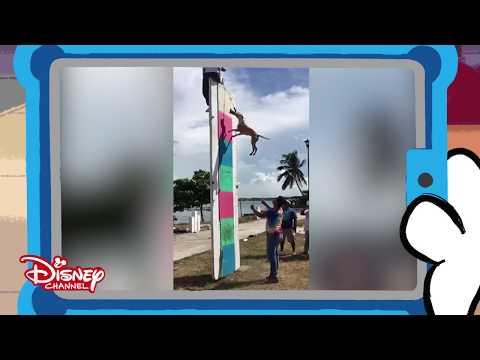 101 Dalmatian Street | Dieren tegen Mensen: Kunstjes | Disney Channel BE