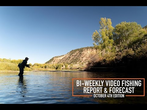 Bi Weekly Video Fishing Report & Forecast - October 4th Edition