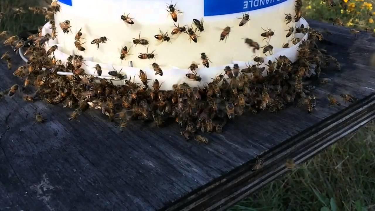 Honey Bee Bucket Feeder In Action Youtube