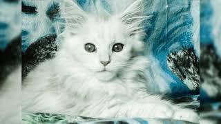 Почему кошки любят смотреть в глаза?