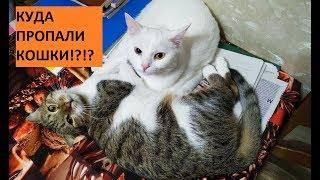 Куда пропали кошки Муизза и Азиза!? Кошка - ниндзя;))) #позитив #кошки