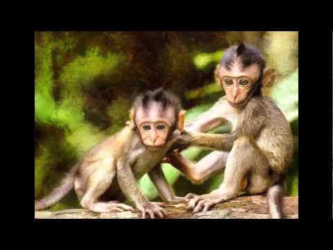 Monkeys and Baby Animals - Public Domain Images. Stock Free Images.