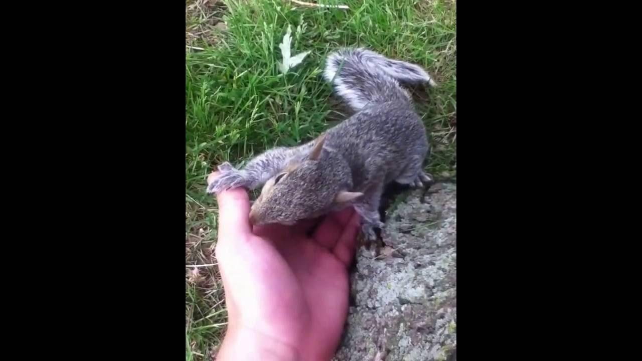 Catching A Baby Squirrel Youtube