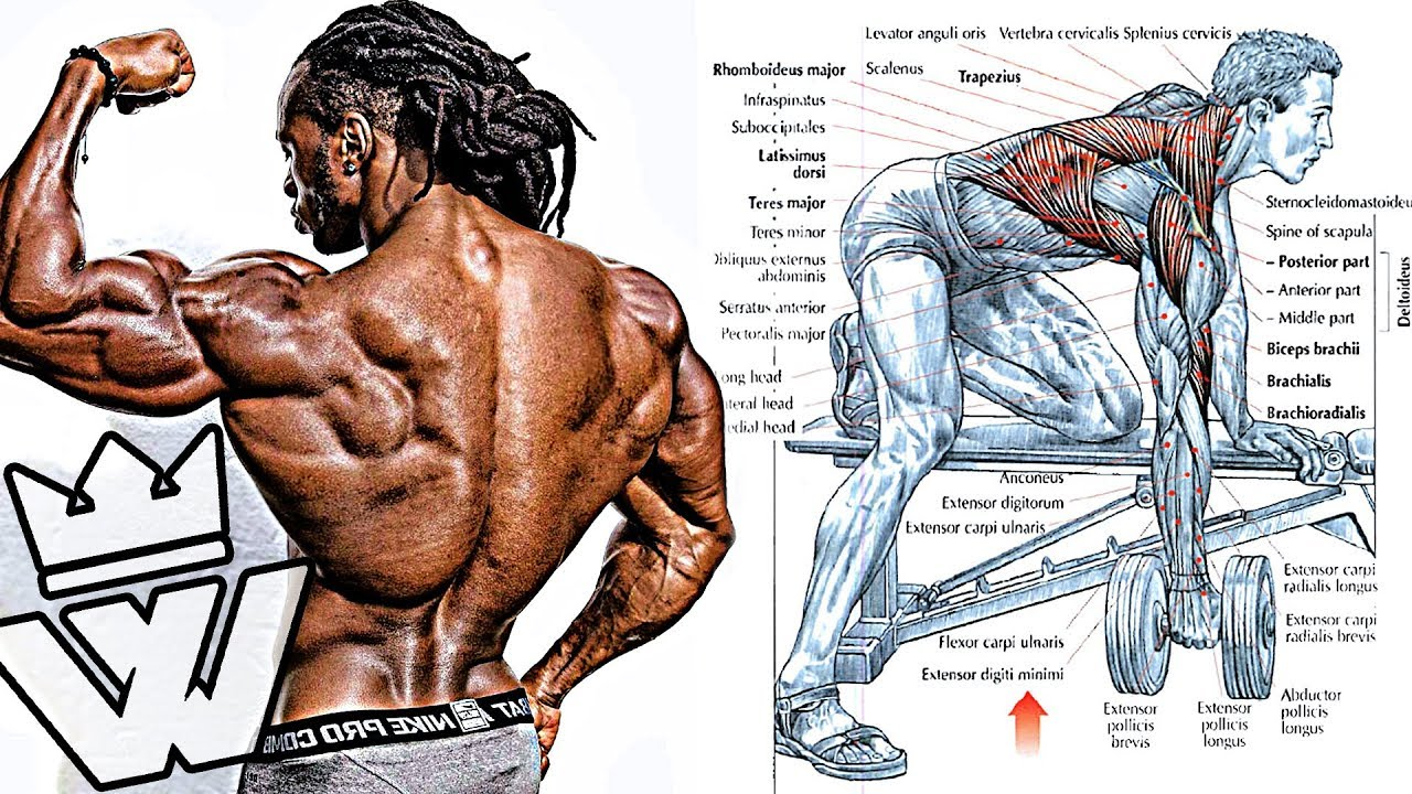 BODYBUILDING EXERCISES: How To Build Cobra BACK