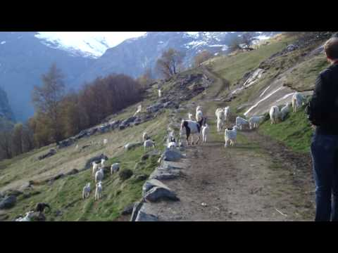 Hike from Vesteras Gard in Geiranger